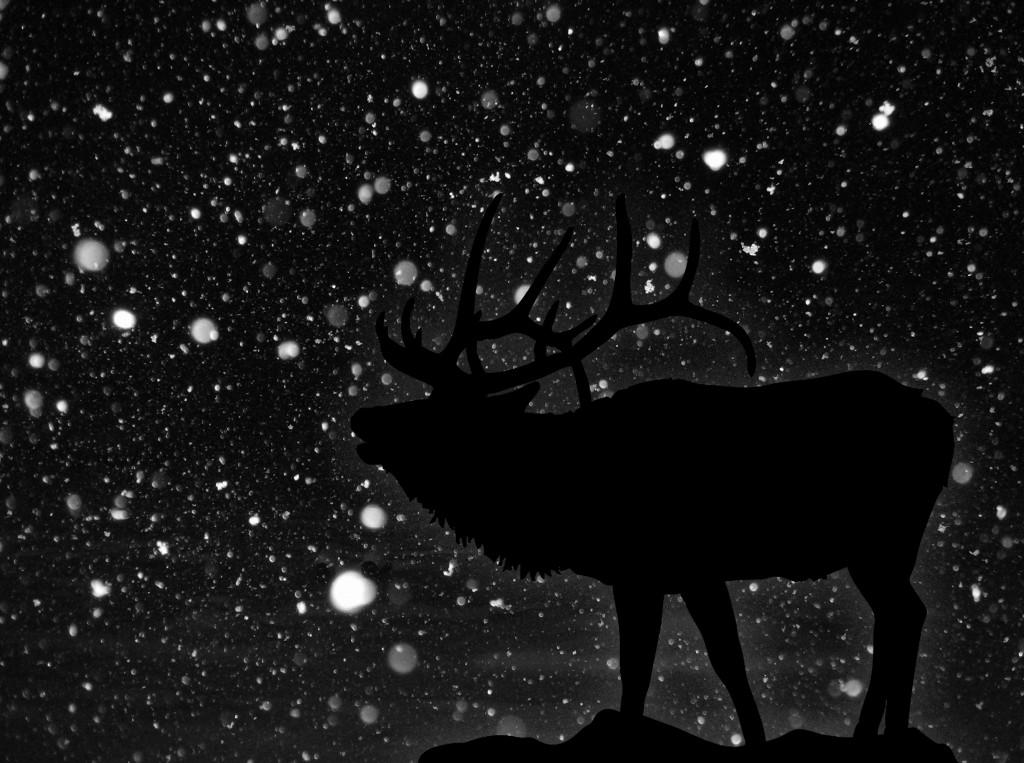 Dark_night_of_snow_by_SilveWolfwind